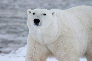 Arktis Schiffsreisen Angebote Nordpol Kreuzfahrten